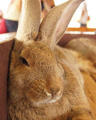 ウサギのアイコン用写真